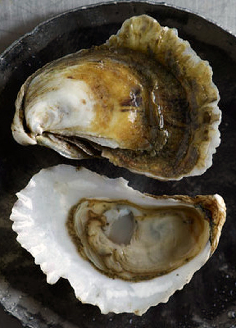 whole oyster shells for sale
