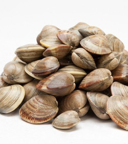 IQF Whole Frozen Clams