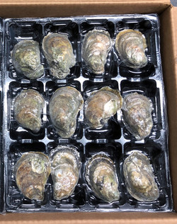 Frozen Whole Oysters Vacuum Skin Tray Packaging